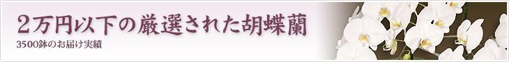 2万円以下の厳選された胡蝶蘭を贈りたい