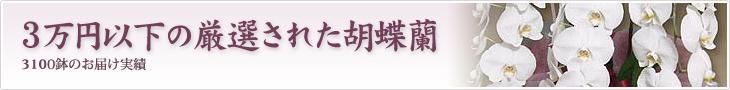 3万円以下の厳選された胡蝶蘭を贈りたい