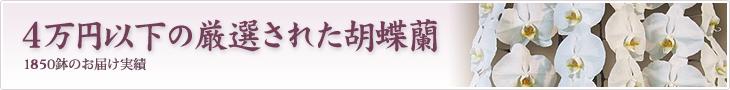 4万円以下の厳選された胡蝶蘭を贈りたい
