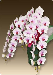 株主総会に素敵な花を飾りませんか?