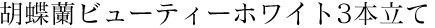 移転祝い用の胡蝶蘭ビューティーホワイト3本立て