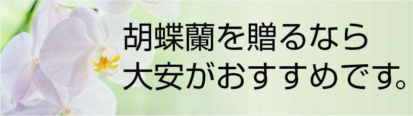 胡蝶蘭を贈るなら大安がおすすめ