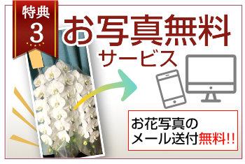 お花の写真のメール送付無料