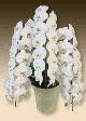 社長就任祝いにおすすめの花はプレミアムホワイト3本立て