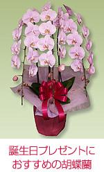 誕生日プレゼントにおすすめの胡蝶蘭