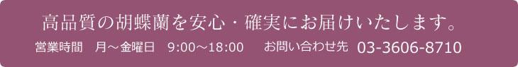 高品質の胡蝶蘭を安心・確実にお届けいたします。 営業時間 月-金曜日 9:00-18:00 お問い合わせ先 03-3606-8710