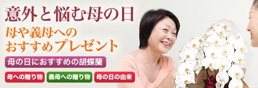 意外と悩む母の日 母や義母へのおすすめ胡蝶蘭